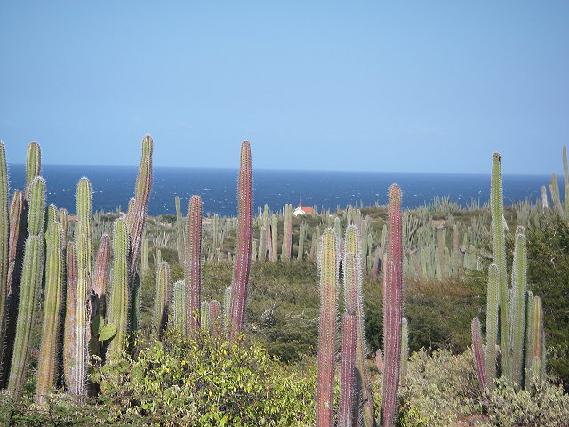 Aruba Cactus and Church