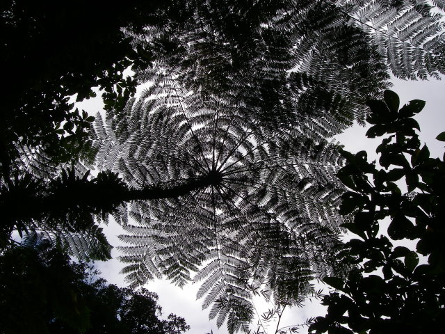 Tree on Dominica