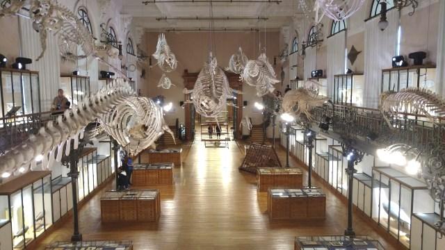 Oceanographic Museum Gallery